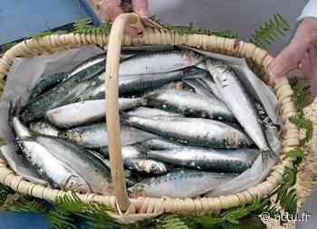 Saint-Gilles-Croix-de-Vie : la pêche à la sardine à l'honneur sur TF1 - actu.fr