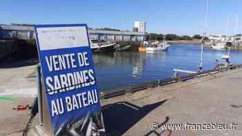 Vendée : la pêche de la sardine commence à Saint-Gilles-Croix-de-Vie - France Bleu
