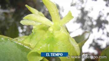 Una demanda y un estudio de orquídeas salvaron un cerro en Fusagasugá - ElTiempo.com