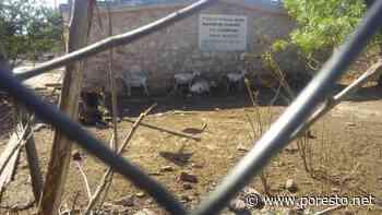 Utilizan patio de escuela como corral en Tixkokob - PorEsto