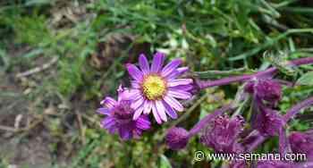 Salud: recopilan usos medicinales de plantas de Sibaté - Semana