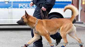 Randale in Rodenbach: Polizeihund beißt Mann ins Bein - Fuldaer Zeitung