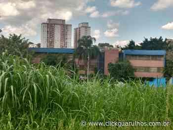 Dois meses depois, matagal próximo a escola continua crescendo - Click Guarulhos