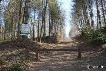 Val-d'Oise. Rodéos sauvages en forêt de Montmorency : les riverains en ont assez ! - La Gazette du Val d'Oise - L'Echo Régional