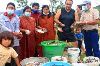 El Milagro: comunidad nativa de Satipo logra su primera cosecha de peces - Agencia Andina