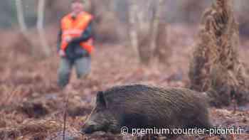 Une battue administrative près de Laon met en colère la fédération des chasseurs de l'Aisne - Courrier picard