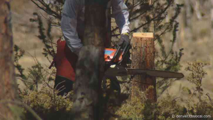 'It's A Team Job': Volunteers Prepare Colorado Lands For Possible Challenging Wild Fire Year
