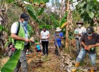 Productores agrícolas de Berbeo, aprenden a mejorar sus cultivos - Diario del Sur