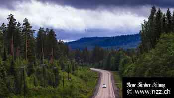 Der Wald– Schwedens Tausendsassa für die «grüne Zukunft»