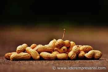 San Luis Potosí entre los diez productores de cacahuate a nivel nacional - Líder Empresarial