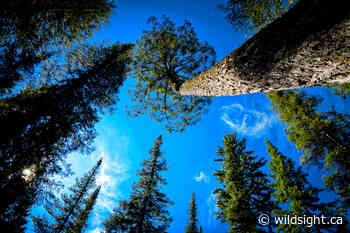 Wildsight Invermere 2021 Annual General Meeting - Wildsight