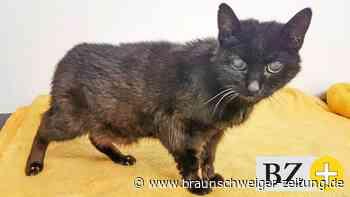 Katzen-Omi will mit 22 noch einmal etwas Neues erleben
