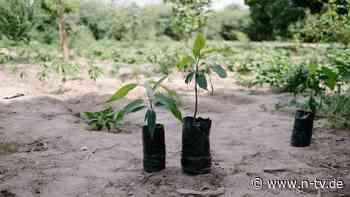Grüne Google-Alternative: Ecosia pflanzt Bäume und markiert RWE