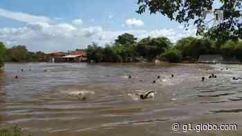 Você viu? Ponte desaba em Bacabal, aeroportos do Maranhão são leiloados e outras notícias da semana no G1 MA - G1