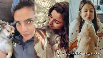 National Pet Day 2021: Priyanka Chopra, Alia Bhatt, Anushka Sharma, Bollywood celebs and their adorable pets - India TV News