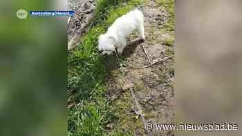 Verschillende honden vergiftigd tijdens wandeling: politie roept op tot waakzaamheid