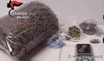 San Vittore Olona: in casa la serra per la marijuana - La Prealpina
