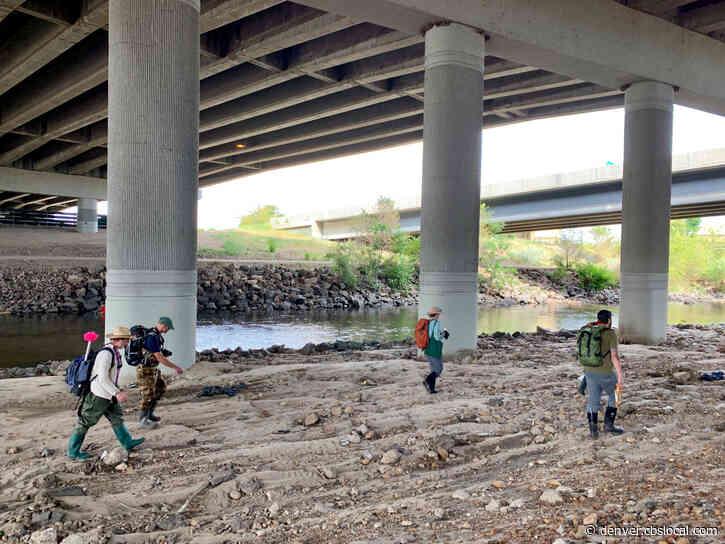 BioBlitz Program To Help Study, Restore South Platte River