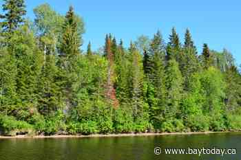 Forestry research company gets FedNor Funding to help the north
