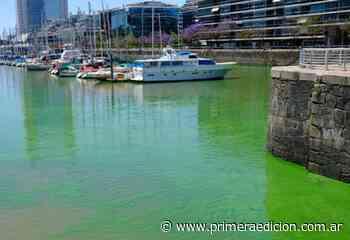 """Sorpresa: """"aguas verdes"""" en pleno Puerto Madero - Primera Edicion"""