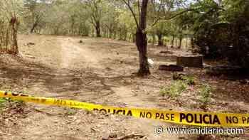 PolicialesHace 2 días Abejas lo matan. Hombre hacía trabajos de apicultura en Natá - Mi Diario Panamá