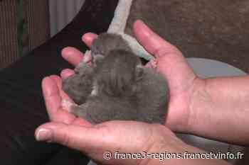 """Dijon : Trois chatons abandonnés dans une benne à verre, """"c'est un acte de malveillance avéré"""" - France 3 Régions"""