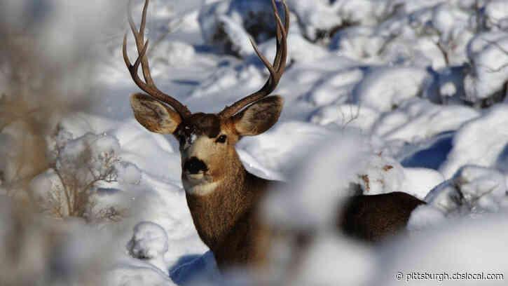 Pennsylvania Game Commission Approves 2-Week Deer Season, Ban Rifles From Turkey Hunts