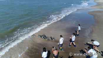 Liberaron 12 pingüinos magallánicos en las aguas de San Clemente del Tuyù - Perfil.com