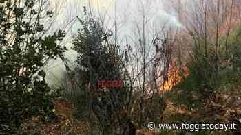 Vasto incendio in agro di Vico del Gargano - FoggiaToday