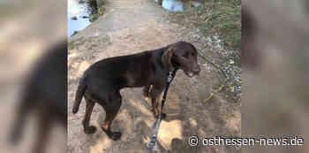 Vom Wunsch, endlich anzukommen: Hund Charlie sucht ein neues Zuhause - Osthessen News