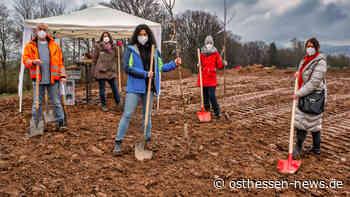 Für die Landesgartenschau: Frauenclub von Soroptimist pflanzt Obstbäume - Osthessen News