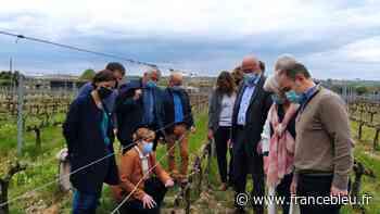 A Langon, une viticultrice touchée par le gel reçoit la visite de plusieurs élus - France Bleu