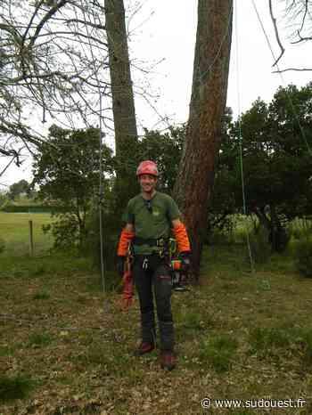 """Audenge : il taille et soigne les arbres de façon """"raisonnée"""" - Sud Ouest"""