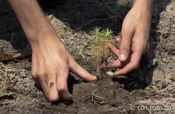 Medio Ambiente y Fundación Comunitaria desarrollan campaña reforestación en San Juan - CDN