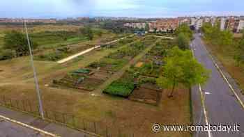Orti urbani è boom di iscrizioni: con il Covid aumentati i romani che cercano un terreno da coltivare