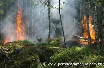 Corpo de Bombeiros Voluntários de Charqueadas é acionado para realizar atendimento a incêndio florestal - Portal de Camaquã