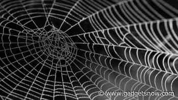 MIT scientists use spider webs to create music