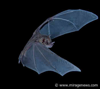 Poop core records 4300 years of bat diet and environment - Mirage News