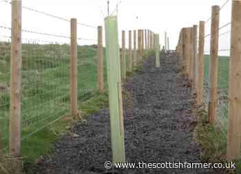 NI seeks agri-environment innovators - The Scottish Farmer