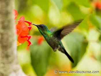 Rapid evolution in foxgloves pollinated by hummingbirds: Study - Devdiscourse
