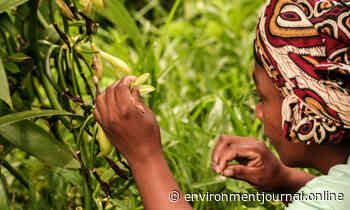 Interview: Why vanilla may be key to protecting our forests - Environment Journal