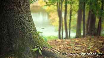 Manipolazione del legno degli alberi di Roma: l'iniziativa alla Caffarella