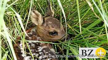 Nabu warnt davor, junge Wildtiere anzufassen