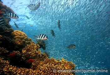 Impacts of sunscreen on coral reefs needs urgent attention, say scientists - Environment Journal - Environment Journal
