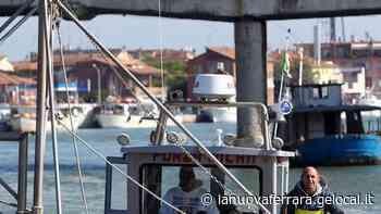 Fermo pesca novellame fino a metà maggio - La Nuova Ferrara
