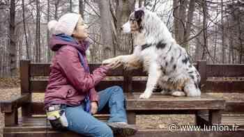 Un parc de loisirs pour chien en projet près de Reims - L'Union