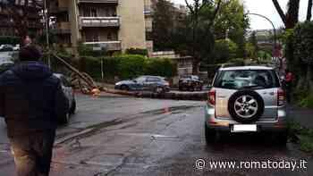 Mostacciano, si è schiantato un altro pino: il crollo è avvenuto in via Vivanti
