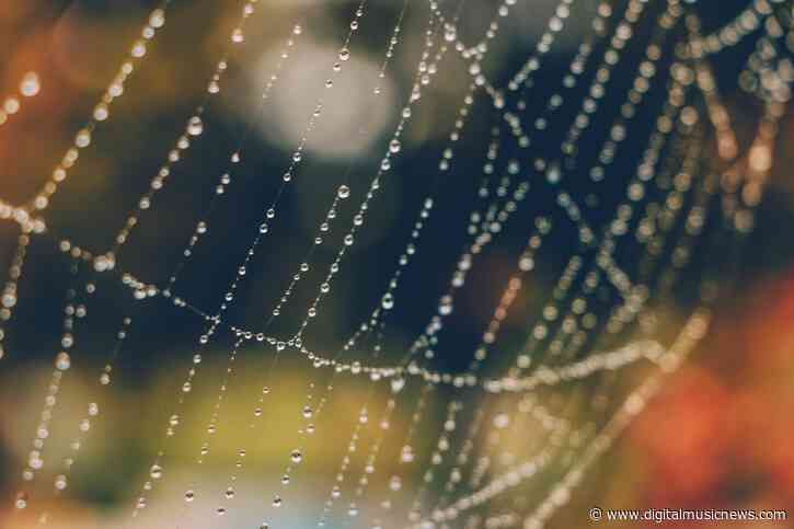 What Do Spiderwebs Sound Like? – Scientists Create Music from their Vibrations
