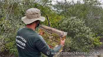 130 animais silvestres mantidos em cativeiro são resgatados em Paulo Afonso - Jornal Correio