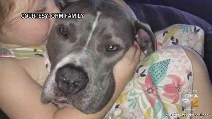 Man Accused Of Opening Fire On Family's Dog In West Mifflin